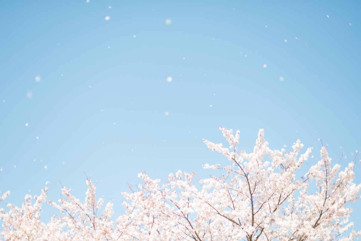 2014 / SHIZUOKA